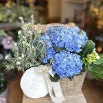 母の日ギフト「紫陽花の鉢植え」