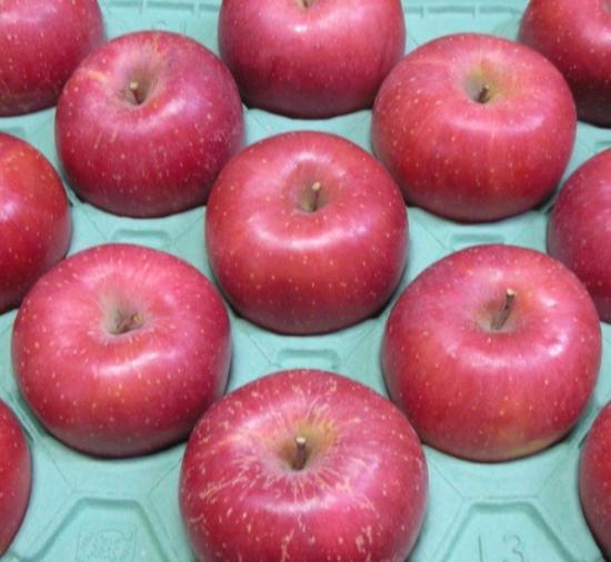 完熟りんご「ふじ」(家庭用 5kg 12〜20玉位)