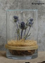 <img class='new_mark_img1' src='https://img.shop-pro.jp/img/new/icons1.gif' style='border:none;display:inline;margin:0px;padding:0px;width:auto;' />The Landscapers / DRY CYLINDER -Eryngium- / Light Wood & ガラス蓋付き Size 20