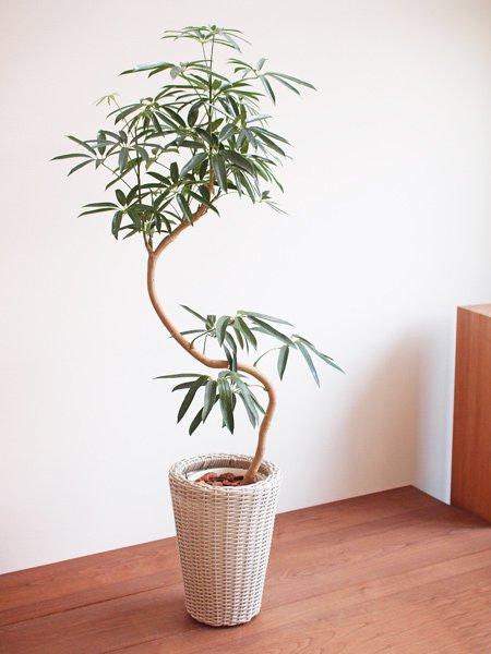心を込めて作った、1点もの鉢植え観葉植物の通販SHOPです。