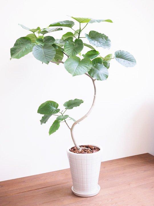 観葉植物の癒やし効果でストレスフリー:白い鉢に入った観葉植物