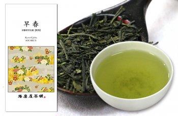 早春  【京都府宇治産】 煎茶