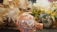 壺蛙〜カエルの大切な壺〜