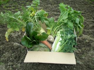 【送料無料】九州産限定「採れたて!有機・低農薬野菜5品以上セット」