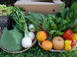 【送料無料】九州産限定「採れたて!有機・低農薬野菜8品以上+果物1品セット」