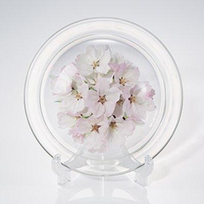 桜のボトルフラワー皿型S(ソメイヨシノ)