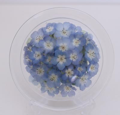 青いネモフイラ畑のボトルフラワー皿型S(ネモフイラ)