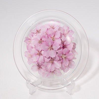 桜のボトルフラワー皿型S(河津桜)