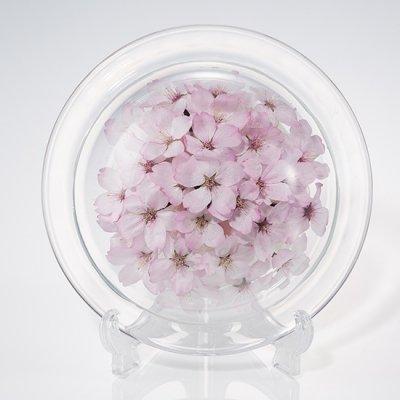 桜のボトルフラワー皿型S(ヒガンザクラ)