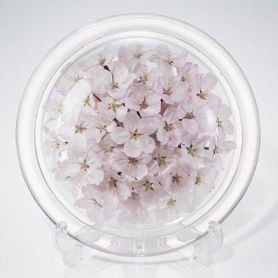 桜のボトルフラワー皿型M(ソメイヨシノ)