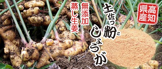 ショウガオール含有 蒸し生姜 しょうがパウダー 高知県産 オリジナル 無添加