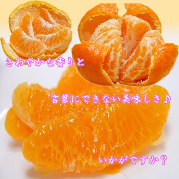 秀品ぽんかん 高知県のおいしい特選ポンカン 大玉 2L 5kg
