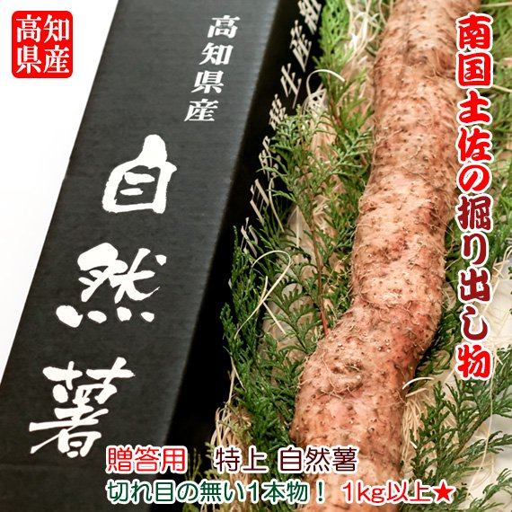 【贈答用】  高知県産 特選 自然薯(じねんじょ) 1kg以上 一本物