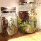 GLASS JAR ガラスジャー WITH JUNGLE